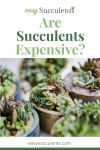 Is Expensive Succulents Really Worth it? Some Ways You Can be certain. Thumbnail