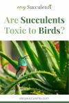 Are Succulents Toxic to Birds? Learn How to Protect Your Beautiful Birds! Thumbnail