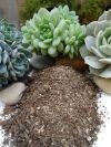 Soil and different types of succulents