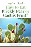 How to Eat Prickly Pear? Here's The Right Way to Enjoy Cactus Fruit! Thumbnail