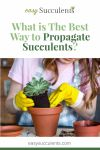 Want to Expand Your Plant Family? Three Easy Ways to Propagate Succulents! Thumbnail