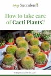How to take care of Cacti Plants? Every Essential Question Answered Thumbnail