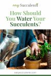 Do My Succulents Need Water? The Top Ten Tips for Watering Succulents! Thumbnail