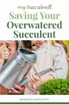 Is Your Overwatered Succulent Dying? Know Some Competitive Tips Here to Heal and Cheer Thumbnail