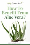 How to Get These 5 Benefits With Aloe Vera Thumbnail
